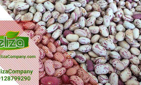 قیمت بروز لوبیا چیتی