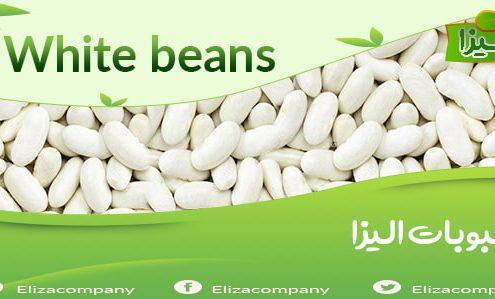 فروش لوبیا سفید صادراتی