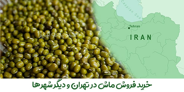 فروش عمده ماش در تهران